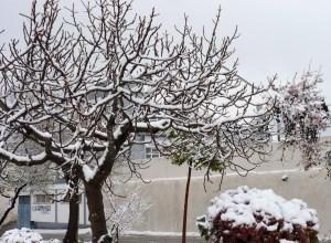 28 feb 2013 snow! 016